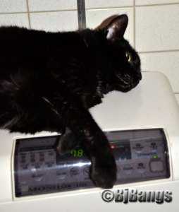 Cat,, Pink Collar, stays warm on the heating monitor.