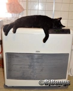 A black cat's new bed, the heating monitor.