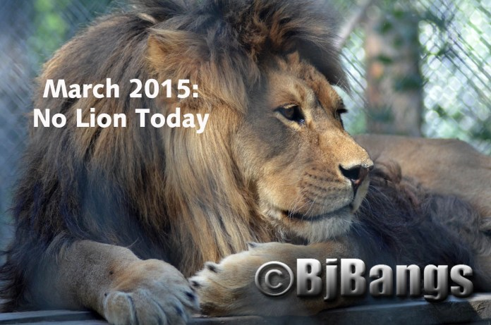 March: in like a lion, out like a peaceful puddy cat, or the other way around this year.