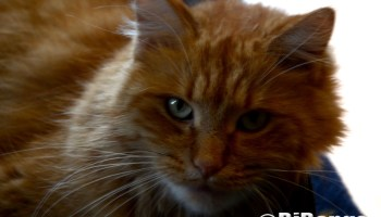 Hacking hairballs on National Hairball Day