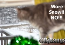 Cat looks at snow through the windows. Kitty says enough snow. I want green grass.