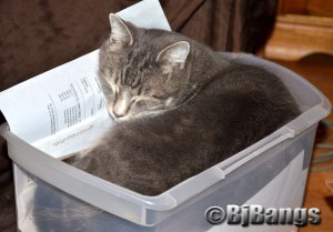 Tabby Cat Lenny is all worn out after helping his mom prepare her taxes