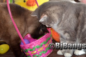 Cats Lenny and Linus check out the Easter basket.