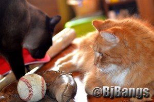 Baseball is America's favorite sport for cats and their humans