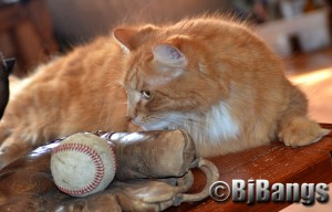 Cat is ready for baseball's opening day.