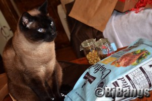 Siamese Cat Linus oversees the Hill's Ideal Balance Crafted that just arrived in the mail