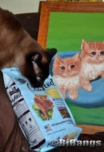 Siamese Cat prefers the Hill's Ideal Balance Crafted cat food over his human's art