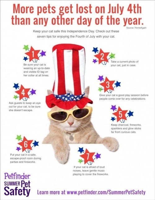 Keep your cat safe this Fourth of July. Infographic courtesy of Pet Finder