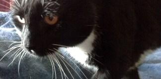 Handsome senior cat