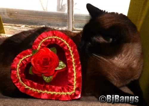 Wow, Mummy got this kitty a very special Valentine