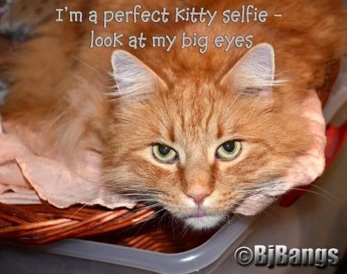 Cat selfie shows off handsome eyes!