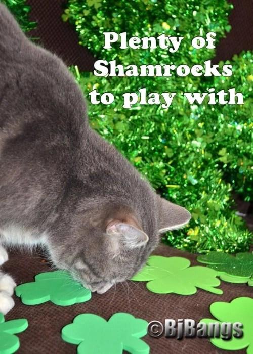 Cat Lenny finds plenty of Shamrocks to play with on St. Patrick's Day