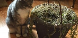 Lenny, a feral kitten, learned everything from humans