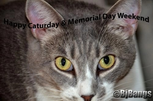 Cat Caturday and a safe Memorial Day