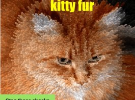 Photo of cat with fur electrically charged