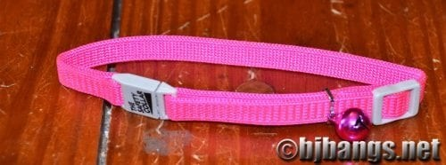 Cat gets a new pink collar