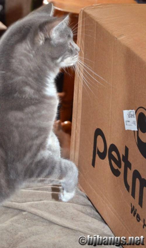 Jackson Galaxy's products define cat mojo