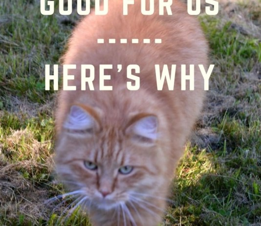 Cats are good for us