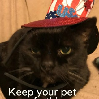 Keep your pet safe this Fourth of July