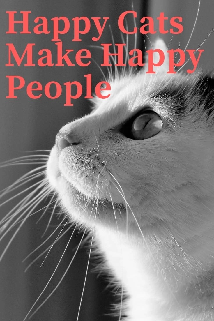 Happy Cats Make Happy People. Learning what makes your cat tick will make him much happier, and now is the time to brush up on that knowledge.