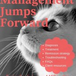 cat photo explaing managing cat diabetes just got easier thanks to a new toolkit for veterinarians and cat caregivers developed by the AAFP
