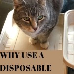 PIn of cat checking out Emerging Green's Disposable Litter Box