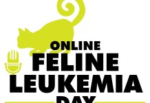 Find out what happens when a cat has feline leukemia at Community Cat's Online Feline Leukemia Day