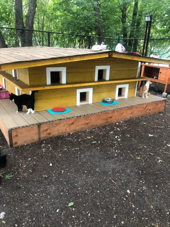 Photo of one of the shelters at the Roosevelt Cat Sanctuary in NYC.