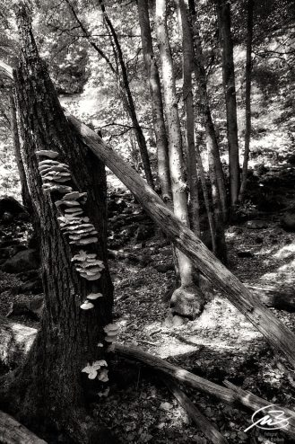 träd, s/v
