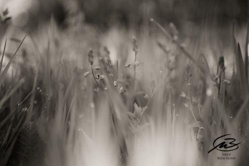 En svajande sommaräng i en härlig svartvit konvertering
