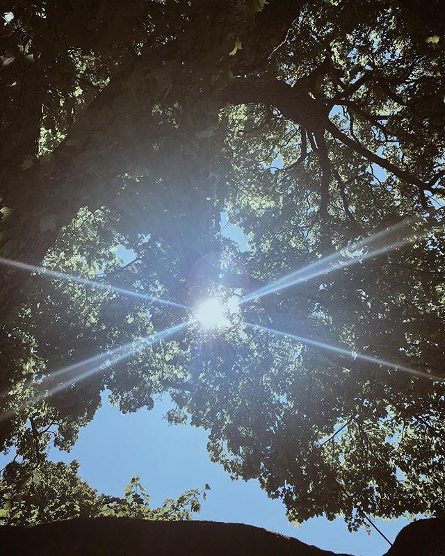 Solig dag genom trädkronan.