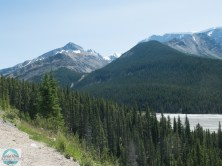 Im Jasper National Park