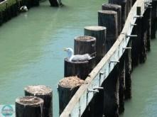Auf dem Steg zwischen Pier 39 und 41