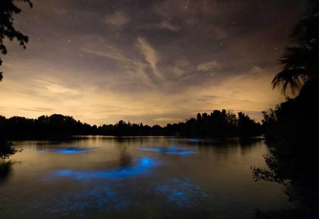 Florida Bioluminescence - derek demeter