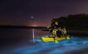 Bioluminescent Kayaking Florida BK Adventure