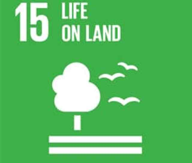 How We Contribute To All Un Sustainable Development Goals