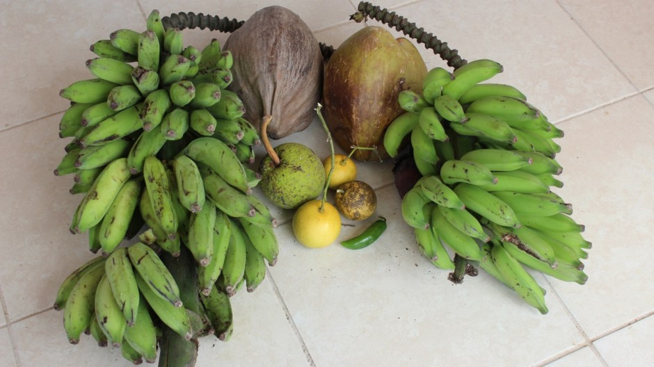 the fruit I found atop the hills of Rincón