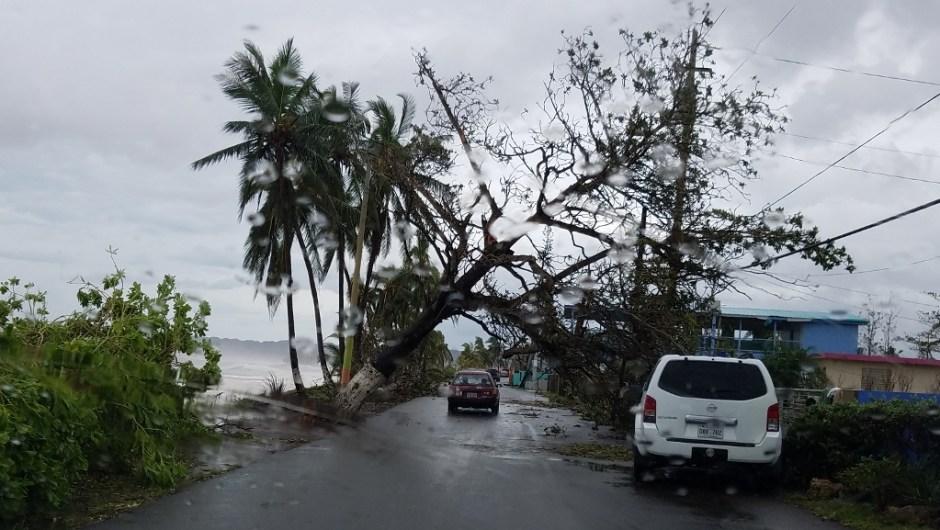 hurricane maria experience puerto rico tree over road
