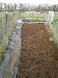 Allotment after several sessions of digging