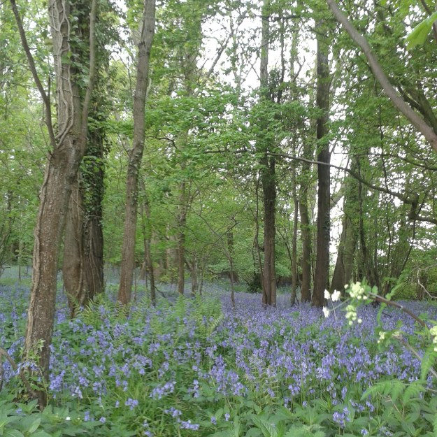 Photo of Bluebell Wood