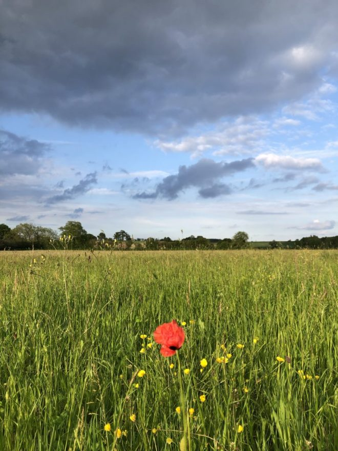 Photo of poppy in field with dramatic sky.