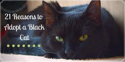 21 Reasons Adopt a Black Cat