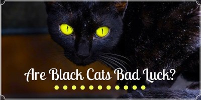 Are Black Cats Bad Luck