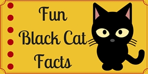 Black Cat Facts_wd