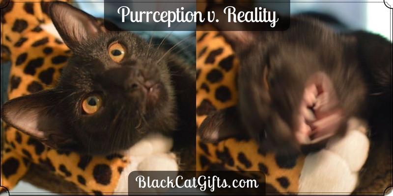 Purception v Reality Possessed