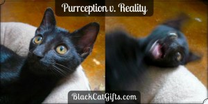 Purrception v Reality Possessed
