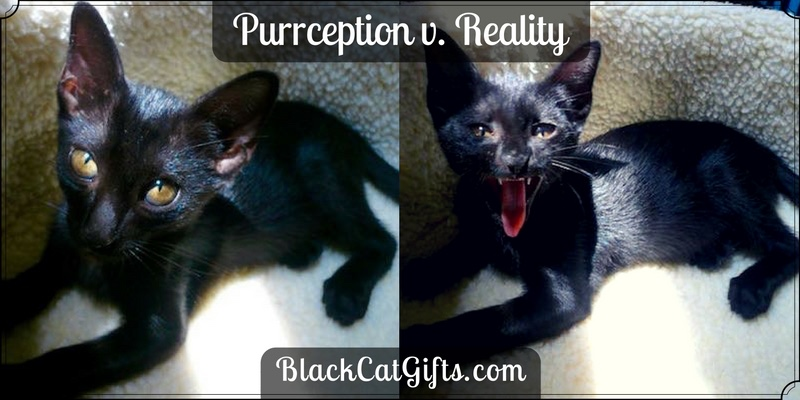 Purrception v Reality Yawning