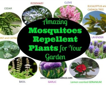 Amazing Mosquitoes Repellent Plants