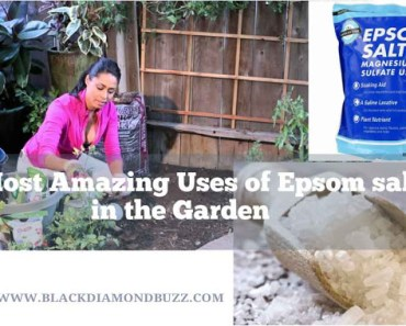 24 Incredible Uses of Epsom Salt at Every home