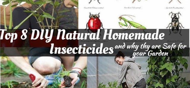 Top 8 Natural Insecticide and why is Safe for your Garden